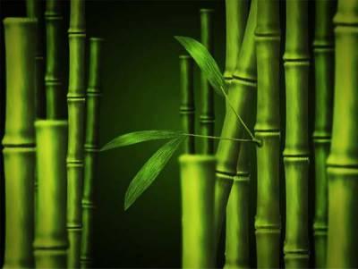 Бамбуковое волокно. Бамбуковые носки